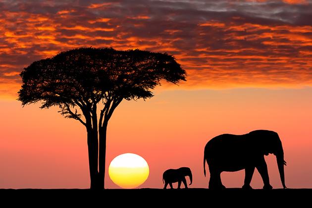 African private preserve